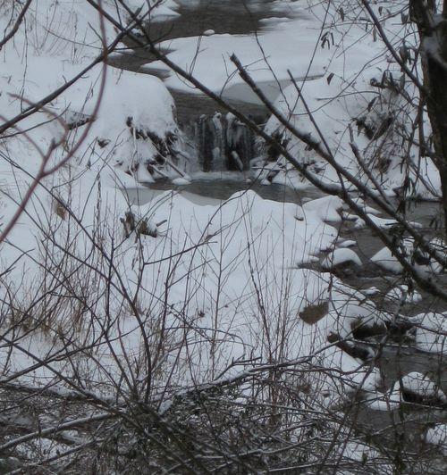 Snowday3-crop