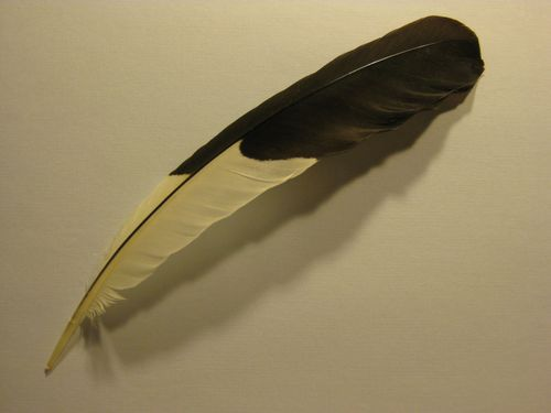 Feather for Cain blog