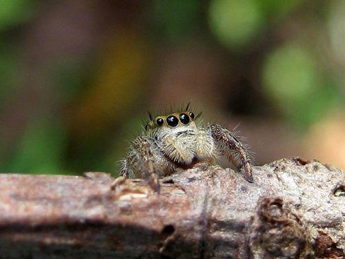 Spider4eyes (3)ED