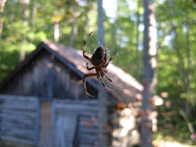 Porch spider_20Sep10ED