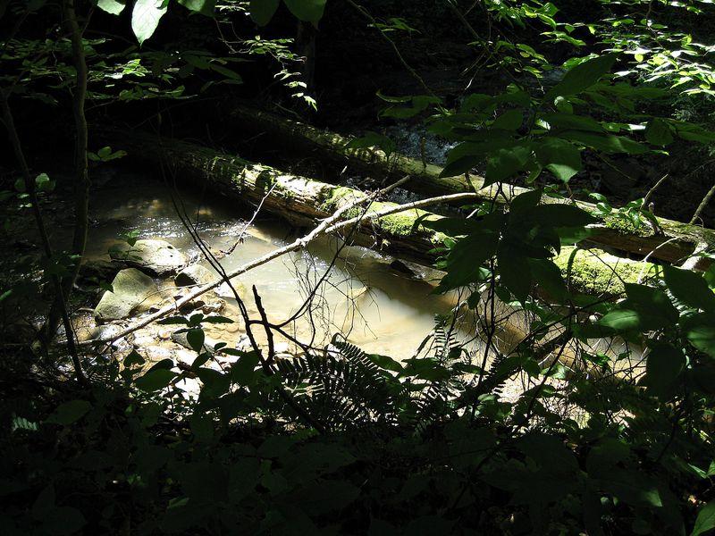 Sunlit pool_Hudson_28May11ed