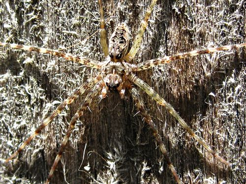 Spider blend_7Jun11 (8)