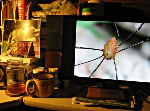 Desk1_17Dec11 (9)ed-c