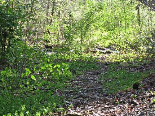 Spring creek path_27Mar12 (3)ed