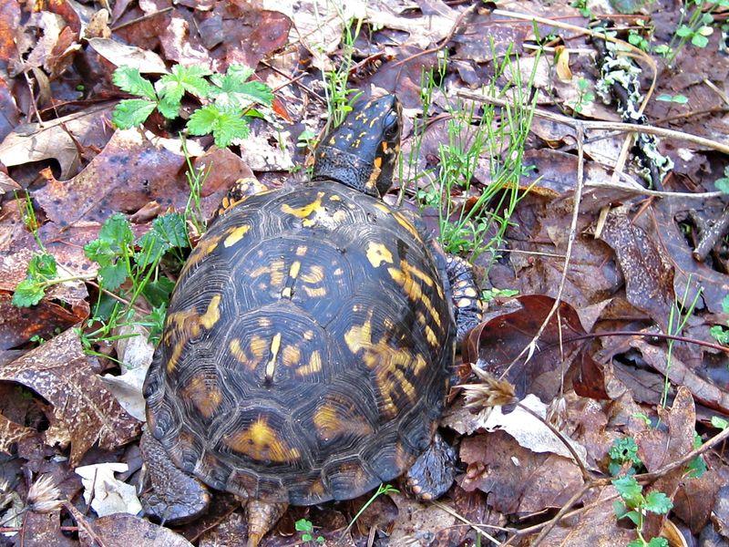 Turtle_18Apr13 (3)e