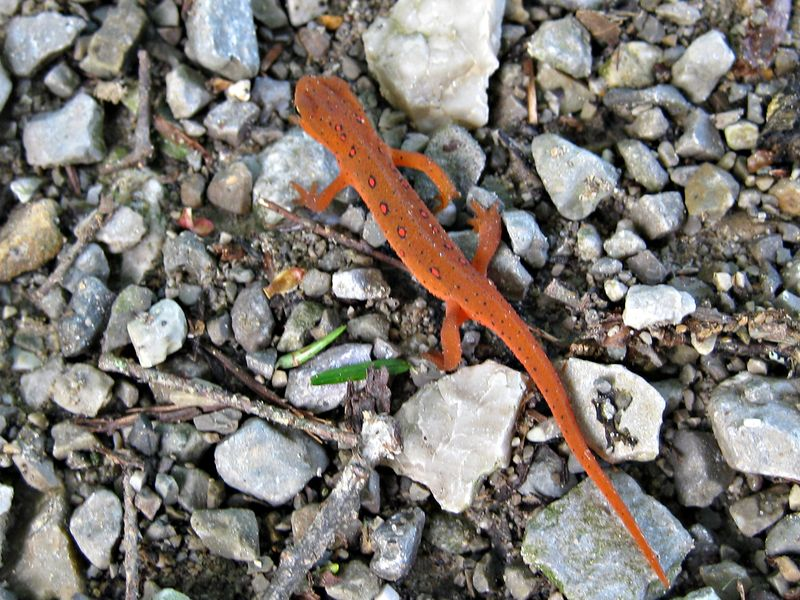Red eft_2May13 (3)e