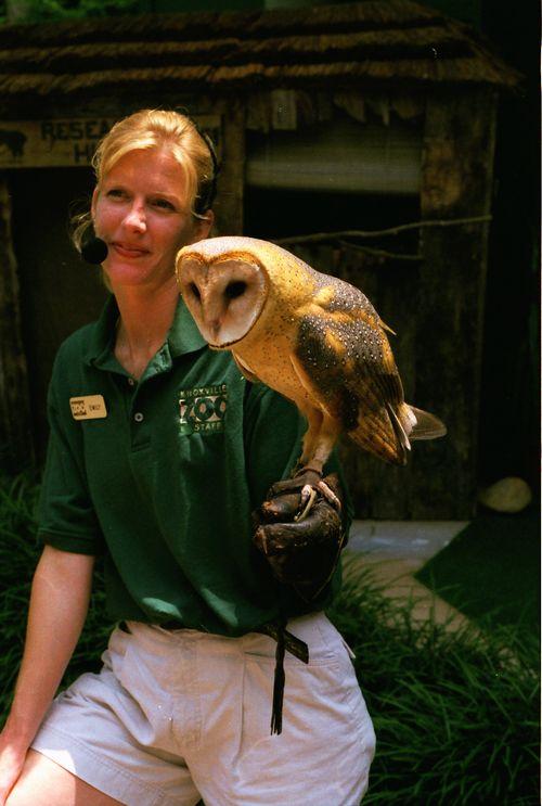 Barn Owl KnoxZoo