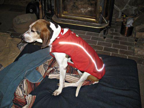 Celie's new coat_7Dec13e