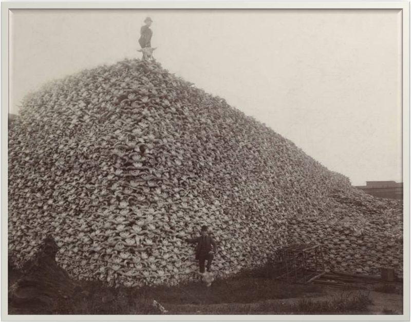 Buffskulls-crop