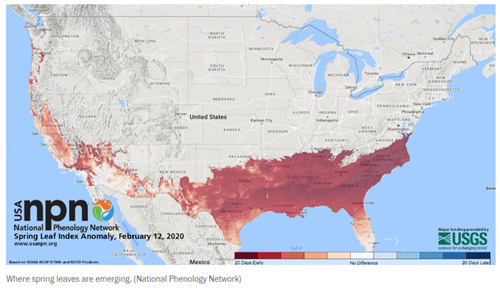 Sprinbg leaf index screenshot for Feb 12-500