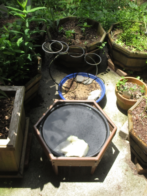 New bath and puddle in planter garden_9Jun20 (1)500
